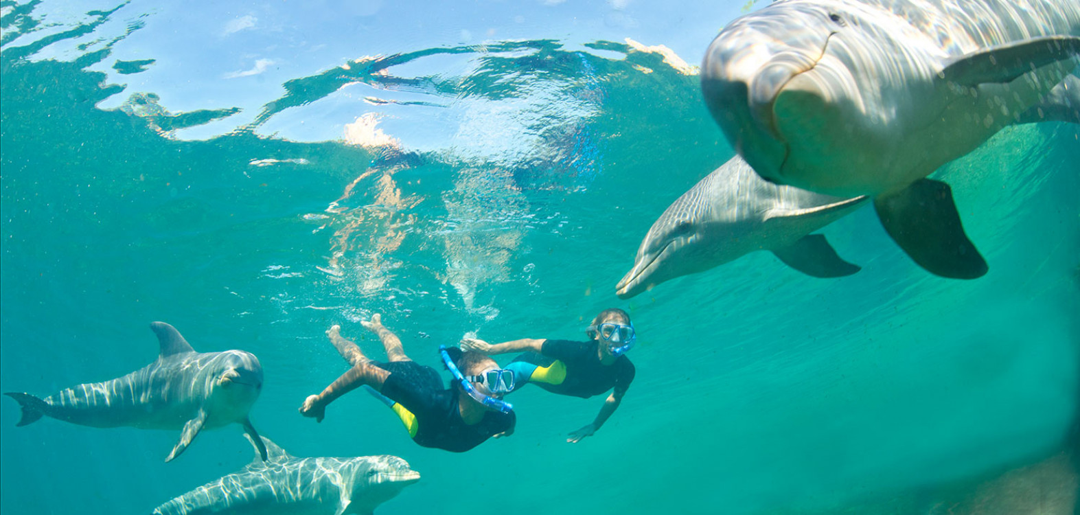 6a4f4d45 Swimming With Dolphins | Bahamas Dolphin Excursions | Atlantis ...
