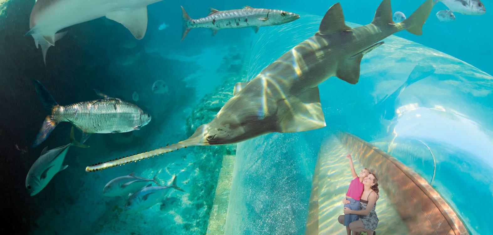 Predator Lagoon Shark Habitat Bahamas | Atlantis Paradise Island