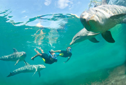 Swimming with Dolphins at Dolphin Cay | Dolphin Habitat
