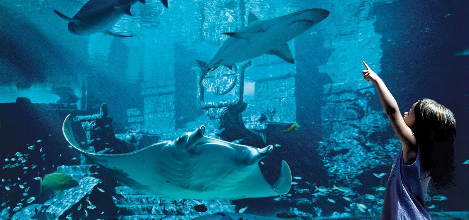 Marine Exhibits & Bahamas Aquarium | Atlantis Paradise Island